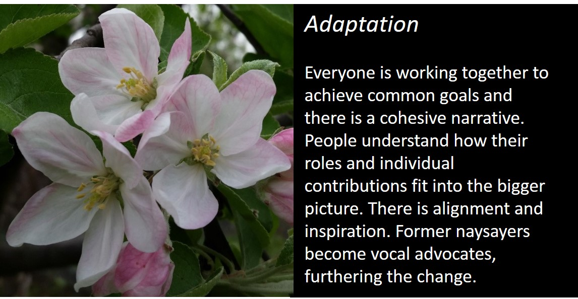 adaptation slide